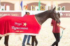 Звезда Туркестана 2018, чемпионка породы Согдиана -шер, КСК Аргамак шер